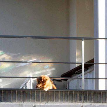 色とりどりの壁と犬