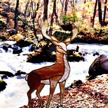森のステンドグラス物語 第二十六話   清らかな水